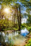 Forest with brook and bright sun royalty free stock image
