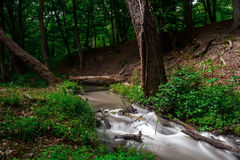 Forest brook. Small river in wood. Fast water stream in forest Royalty Free Stock Photos