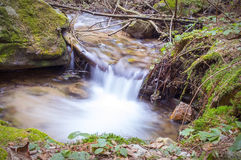 Forest brook waterfall Stock Images