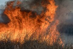Free Forest Brush Grass Wild Fire Flames Burning Prescribed Burn Global Warming Stock Images - 172827704