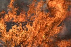 Free Forest Brush Grass Wild Fire Flames Burning Prescribed Burn Global Warming Stock Photos - 172828013