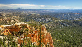 Forest in Bryce Canyon Royalty Free Stock Photography