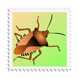 Forest bug Royalty Free Stock Photography