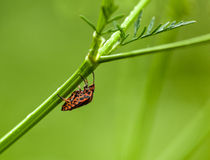 Forest bug hidden under grass stem Royalty Free Stock Photo