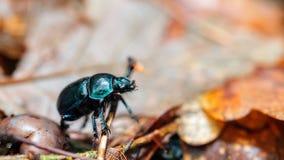 Forest Bug. Stock Photos