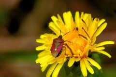 Forest bug. Summer. Stock Photos