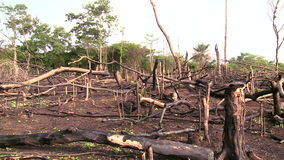 Forest burned out by slash and burn