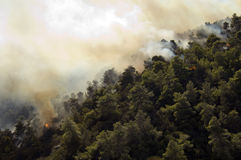 Forest Burning Athens. Flames spread in forest outside athens Stock Images