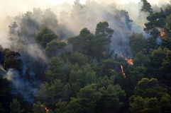 Forest burning Athens. Flames spread in forest outside athens Stock Photography