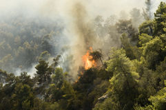 Forest burns. Flames spread in forest outside athens stock image