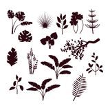 Forest bush and grass silhouette set. Forest bush and grass set. Nature plants, jungle and greenwood black vector silhouettes isolated on white background Stock Photo