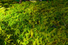 Forest bush Stock Images