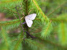 Forest butterfly Stock Image