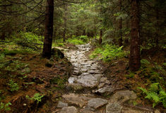 Forest Bypath Made of Stones Stock Images