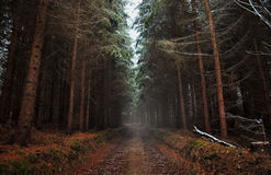 Forest Bypath Stock Images
