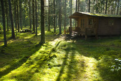 Forest Cabin on Sunny Morning. Peaceful view of a secluded hunter's cabin on a sunny morning Royalty Free Stock Photo