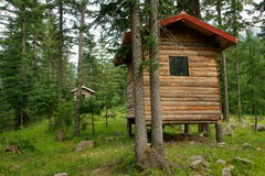 Forest cabins. Wooden cabins in pine forest royalty free stock photos