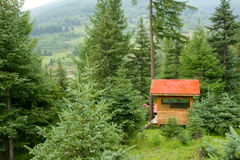 Forest cabins. Wooden cabins in pine forest royalty free stock image