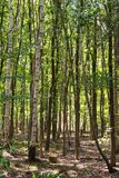 Forest called Chaamse Bossen, The Netherlands stock photography