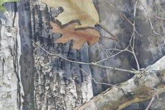 Forest Camouflage mit Blättern und Bäumen Stockfotos