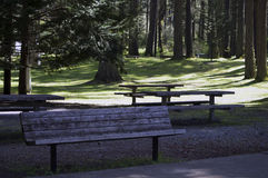 Forest Campgrounds Stock Afbeeldingen