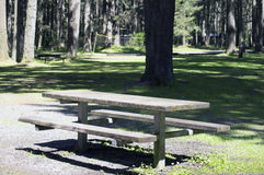 Forest Campgrounds Stock Foto