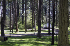 Forest Campgrounds. Forest of trees at Holiday Park campgrounds on Joint Base Lewis-McChord (JBLM) in Tacoma, Washington. Old McChord Air Force Base now known as royalty free stock photos