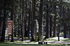 Forest Campgrounds. Forest of trees at Holiday Park campgrounds on Joint Base Lewis-McChord (JBLM) in Tacoma, Washington. Old McChord Air Force Base now known as stock photo