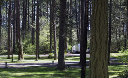 Forest Campgrounds. Forest of trees at Holiday Park campgrounds on Joint Base Lewis-McChord (JBLM) in Tacoma, Washington. Old McChord Air Force Base now known as stock image