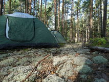 Forest Camping. Forest Adventure Outdoorlife Wild Wildlife Outdoor Hike Hiking Camping Wood Moss Reindeer moss Trees Tent stock images