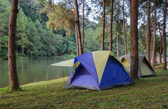 Forest camping tents near lake Stock Images