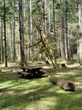 Forest campsite. Campsite with a picnic table in the forst royalty free stock image