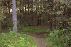 Forest. The forest can be sparse or dense. Foresters divide it into woodlands, Malopolskie, srednerynochnye and vysokovoltnoye forest areas. The forest may be Stock Images