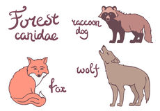 Forest canidae animals set. Stock Image