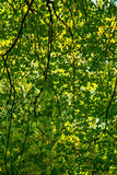 Forest canopy Stock Images
