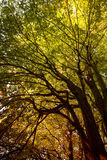 Forest canopy Stock Photography