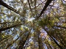 Forest Canopy Image libre de droits