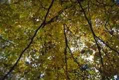 Forest Canopy Foto de archivo