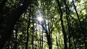 Forest Canopy Arkivbilder