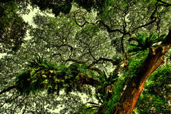 Forest Canopy in HDR Royalty Free Stock Photo