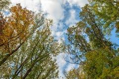 Forest Canopy i tidig nedgång Arkivbilder