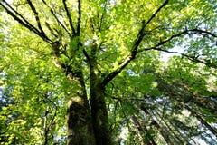 Forest Canopy im Sun Lizenzfreie Stockfotos