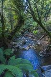 Forest canopy over stream in rain forest Stock Images