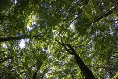 Forest Canopy Shot With Fish Eye Lens Stock Images
