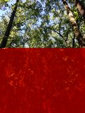 Forest Canopy. Canopy of a forest with the sky in the background royalty free stock image