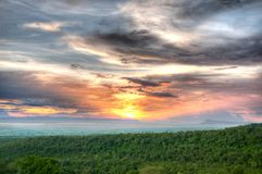 Forest canopy in sunset sky Stock Images