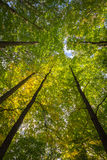 Forest Canopy Royalty Free Stock Photos