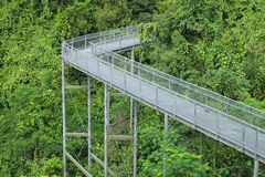 Forest Canopy Walkway Stock Photography