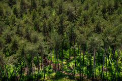 Forest, Carinthia, Austria Royalty Free Stock Photography