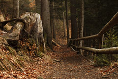 Forest in Carpathian mountains Royalty Free Stock Photography